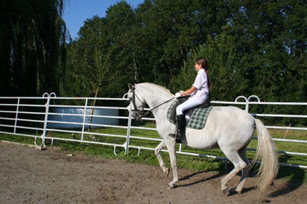 ausbildung-reiter-pferd5D977947-C023-38F0-740D-7DBA5B2CA274.jpg